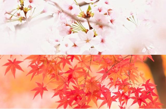 春のお花見と秋の紅葉でどんな服を着る?そんなことも教えてくれる。
