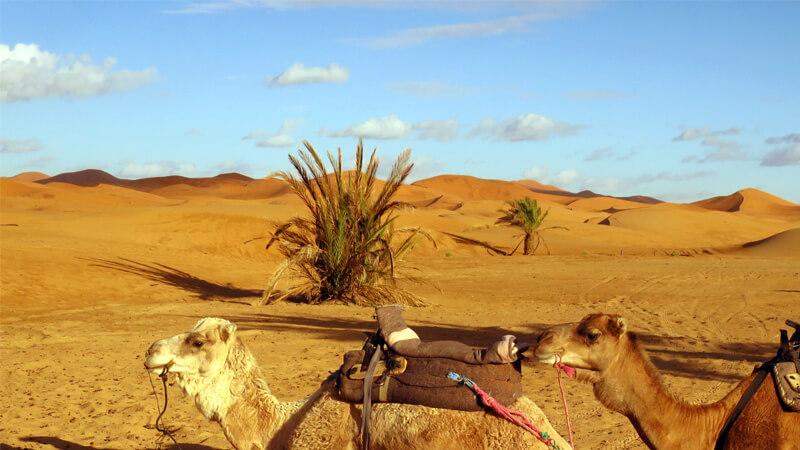 モロッコのアルガンオイル