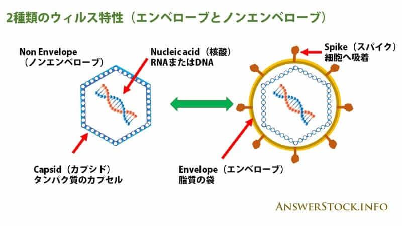 ウィルスはエンベロープとノンエンベローブに分かれる。ノロウイルスにアルコールは効かない理由です。